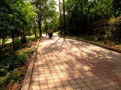 A road way at Radha Kunj Garden at Art of Living Bangalore Ashram
