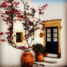 #House #climbers #flowers #flower ##beauty #beautiful
