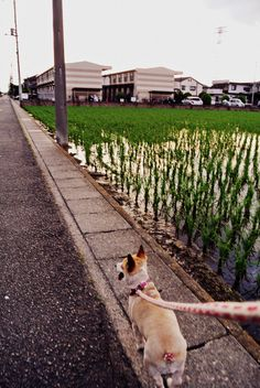 afternoon walk with Marii-chan