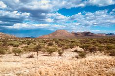 Escape To Namibia // Discover One of Africa's Most Magnificent Countries by Laure Perrier Chameleon, Photojournalism, Countries, Africa, Culture, Travel, Viajes, Chameleons, Trips