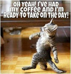Today is your day. Cat Quotes, Animal Quotes, Animal Memes, Funny Quotes, Happy Coffee, Good Morning Coffee, I Love Coffee, Cute Cats, Funny Cats