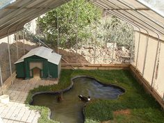 Duck Pens and Coops | Recent Photos The Commons Getty Collection Galleries World Map App ...
