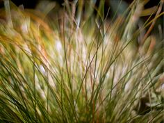 Sun Spray by RussellHartPhoto on Etsy