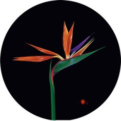 'Bird of Paradise on Black Glass Trivet'  Toughened glass table protector / mat. 30 cm   Visit :  www.andrewflintdesign.com  to see more or to purchase.