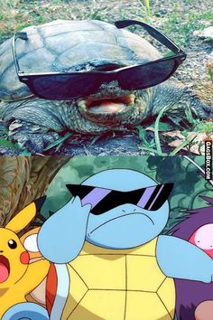 Real Life Pokemon Squirtle - #funny, #lol, #humor, #jokes, #pictures, #pics
