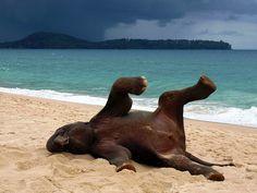 Phuket Elephant on the Beach by John Lindie, via Flickr
