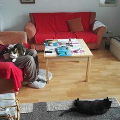 Isäni ja kissat Miina sekä Milla.