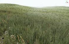 Resultado de imagen para grass texture free photoshop