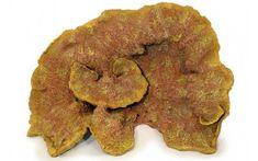 Rocks & Coral - Leucosia Artificial Living Coral is an ideal Aquarium Decoration. This Replica Reef Coral is ideal for any aquarium.Leucosia Artificial Specimen Coral - Our Leucosia Artificial Specimen Coral is an ideal Aquarium Decoration. Artificial Coral, Aquarium Decorations, Non Toxic Paint, Dog Food Recipes, Dog Recipes