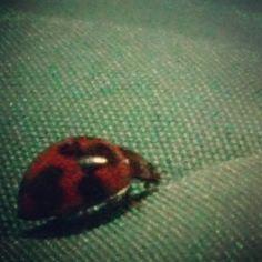 #beatles #bug #red #black #myphoto #sony #nature.