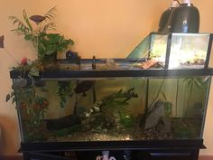 I think my photo of the turtle basking area confused some people, so here's a pic of the whole 90-gal tank (with basking area on top)