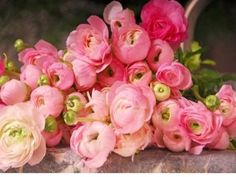 cant stop dreaming!  how to find a ranunculus in september?