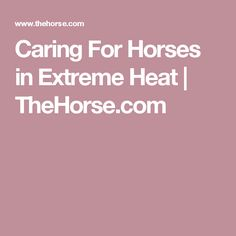 Caring For Horses in Extreme Heat | TheHorse.com
