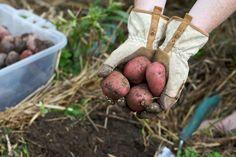 Mês a mês: o que deve plantar na horta | O Meu Jardim