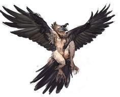 Bearded vulture harpy