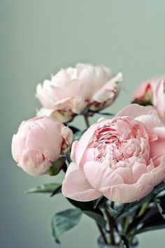 Pink peonies- I wouldn't object to someone showing up on my doorstep with these