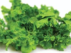 Wrinkled Crinkled Cress (Lepidium sativum) A very crinkled and ruffled garden cress; attractive for salads and popular with chefs; quite flavorful.