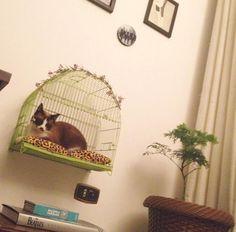 Antes e depois gaiolinha vira caminha de gato - Blog Remobília - Estúdio Vira Lata
