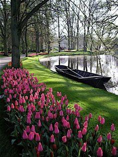 Spring with pink tulips in Holland / Tulipanes en los jardines de Keukenhof, Holanda.