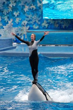 SeaWorld! Would YOU like soeone standing and trampling on YOUR face? I think NOT! #SeaCircus #Captivitykills