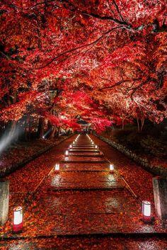 Luxurious Impressions — lifeisverybeautiful:     Kyoto, Japan via Dye it...