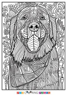 "Free printable Golden Retriever coloring page ""Booker"" available for download. Simple and detailed versions for adults and kids."