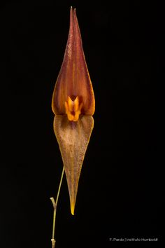 Lepanthes sp. Signs, Colombia, Food, Shop Signs, Sign