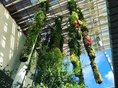 Hot Hot Heat Part Pérez Art Museum Miami – TheGardenGeneralist Perez Art Museum, Modern Art, Contemporary, Houseplants, Container Gardening, Miami, Sculptures, Around The Worlds, Tropical