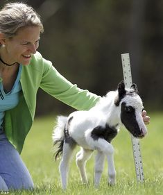 Meet Einstein, the world's smallest horse who weighs less than a newborn baby.  OMG.