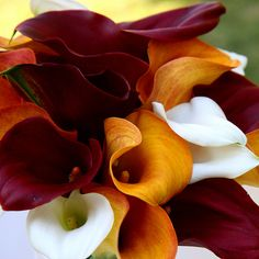 Perfectt for fall wedding calla lily bouquet Fall Wedding Bouquets, Fall Wedding Colors, Autumn Wedding, Wedding Flowers, October Wedding, Bridesmaid Bouquet, Bridal Bouquets, Calla Lillies, Calla Lily