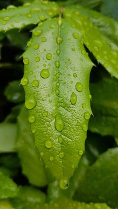 Rain is life🌱 Leaf Spring, Spring Green, Samsung Photos, Rain Drops, Rainy Days, Plant Leaves, Earth, In This Moment, Natural