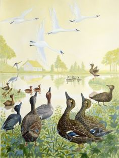 THE UGLY DUCKLING by EMMA CHICHESTER CLARK