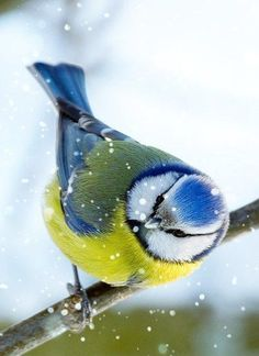 Pretty colored bird surrounded by falling snowflakes