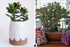 plantas resistentes ao sol