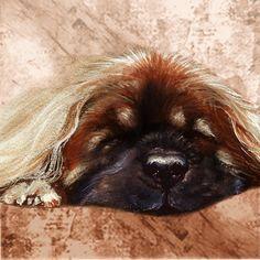 Rotumallisto - Taide Milou Dogs, Animals, Animales, Animaux, Pet Dogs, Doggies, Animal, Dog, Animais
