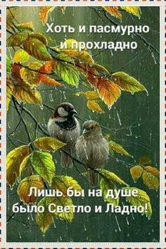 Утро Positive Quotes, Good Morning, Greeting Cards, Bird, Humor, Painting, Animals, Bom Dia, Animales
