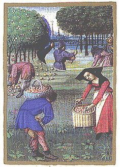 Gathering apples. Le Rustican, Pierre de Crescens. Flemish, early 16th century.