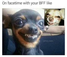 memes hilarious can't stop laughing ; memes to send to the group chat ; memes hilarious can't stop laughing funny ; Funny Animal Jokes, Funny Dog Memes, Crazy Funny Memes, Really Funny Memes, Cute Funny Animals, Funny Animal Pictures, Funny Relatable Memes, Cute Baby Animals, Funny Cute