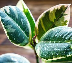 Top 10 Indoor Plants Hanging Plants, Indoor Plants, Mother In Law Tongue, Swiss Cheese Plant, Fertilizer For Plants, Types Of Succulents, Monstera Deliciosa, Low Maintenance Plants, Room To Grow