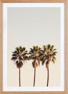 3 Palms - Catherine McDonald - Gerahmtes Poster