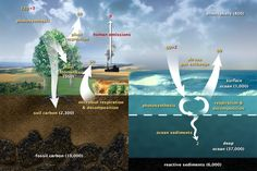 Carbon cycle shows twice as much carbon is stored in our soils than in the atmosphere or vegetation.