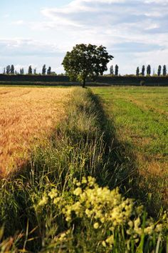 The Parma countryside