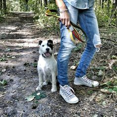 Walk in the forest with    dedicated D. DOG LEASH