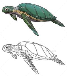 Buy Sea Turtle Illustration by lucidmoon on GraphicRiver. Digital Illustration of Sea Turtle. The zip file consist of 2 transparent PNG files and a PSD file. Fish Art, Animal Drawings, Digital Illustration, Sea Creatures, Drawings, Sea Turtle Drawing, Sea Illustration, Turtle Tattoo, Watercolor Sea