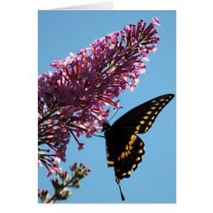 Black Swallowtail Butterfly Birthday Card - black gifts unique cool diy customize personalize
