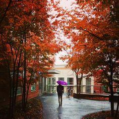 Rainy fall day at Tufts