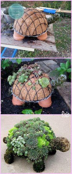 Jardinage : tortue de plantes grasses. Trop beau !