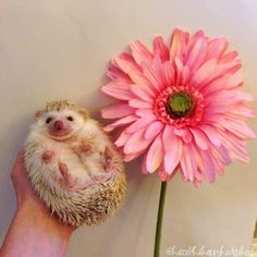 That goodness is mostly hedgehogs.   19 Pictures Of Hedgehog Bellies That Prove Everyone Has A Soft Side
