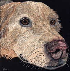 """This is my latest Scratchboard """"Quincy"""". This is the first time I've used Watercolor paint to add color. I found them easier to use then the special inks and I had much more control over the colors!! Unfortunately, Quincy passed away recently and was the beloved pet of a gentleman that has worked for my wife's company for the past 20 years. This will be a surprise memorial gift for him and his wife.  Material was a 6x6 inch Ampersand Scratchboard and Watercolors."""