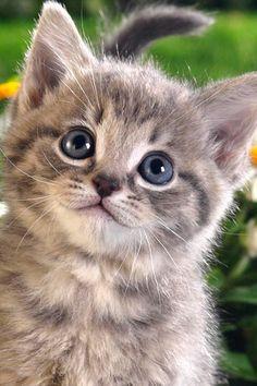 #1 of Happy Cats (Cute little grey happy cat!)
